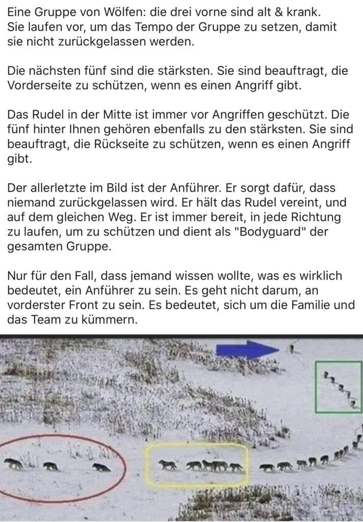 """Wolfsrudel: Der bekannte virale Hoax """"Eine Gruppe von Wölfen"""""""