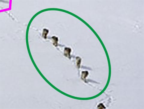 Wolfsrudel Gruppe grün